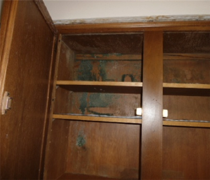 Evidence of mold in cabinets